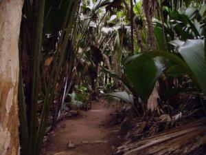 faune et en flore des Seychelles sur l'ile desur Praslin